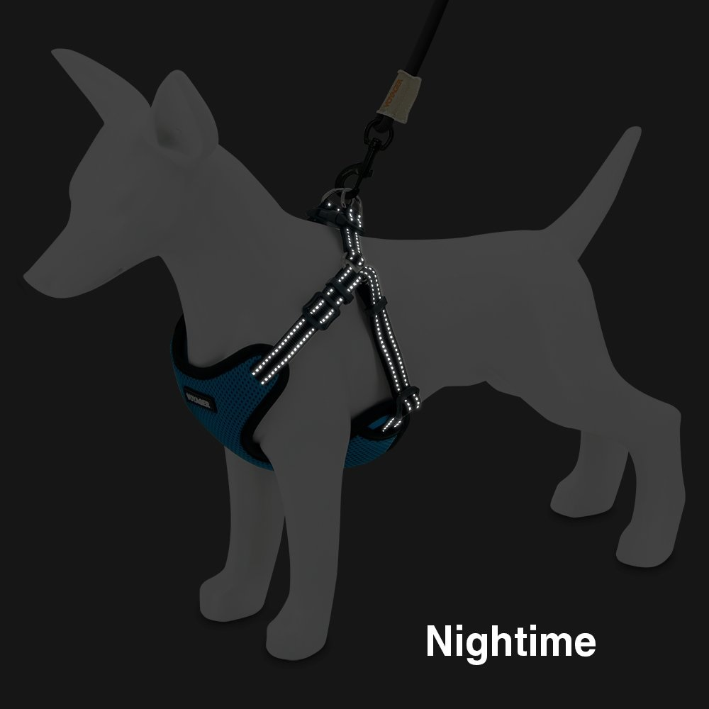 harness nighttime jpg