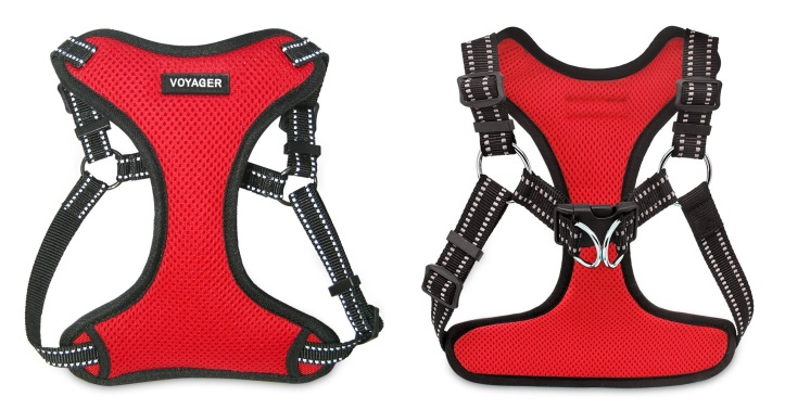 harness red 1